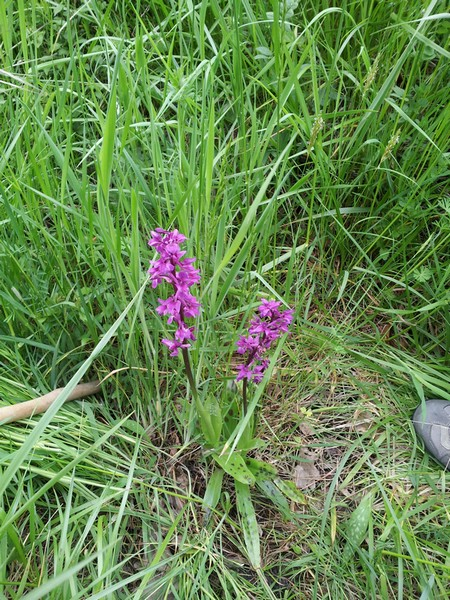 marcheurs/marche-orchidee-1-clion-mai-2013-1.jpg